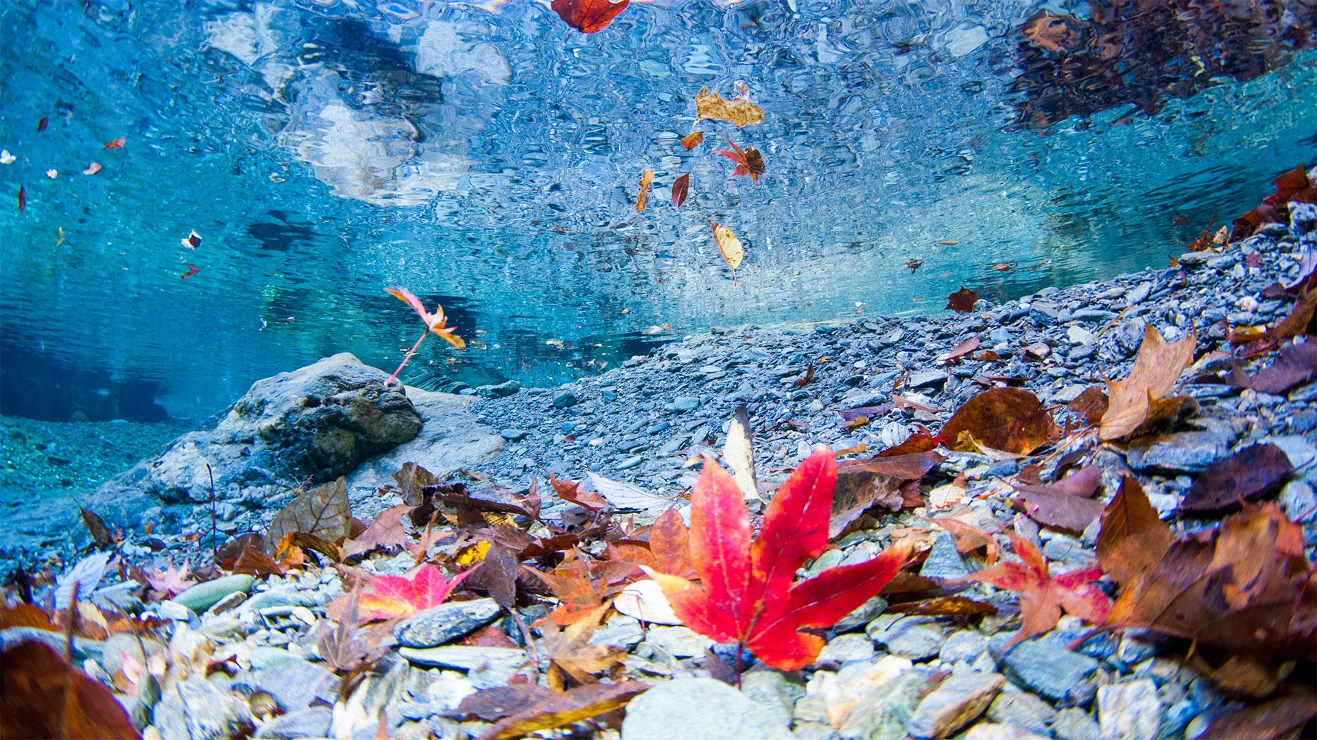 ダイビング水中写真:海だけじゃない!山でも紅葉を楽しむ