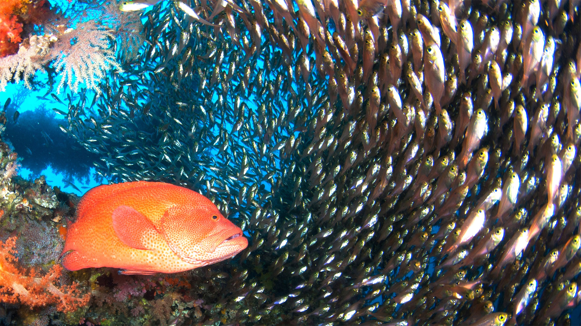 ダイビング水中写真:魚群