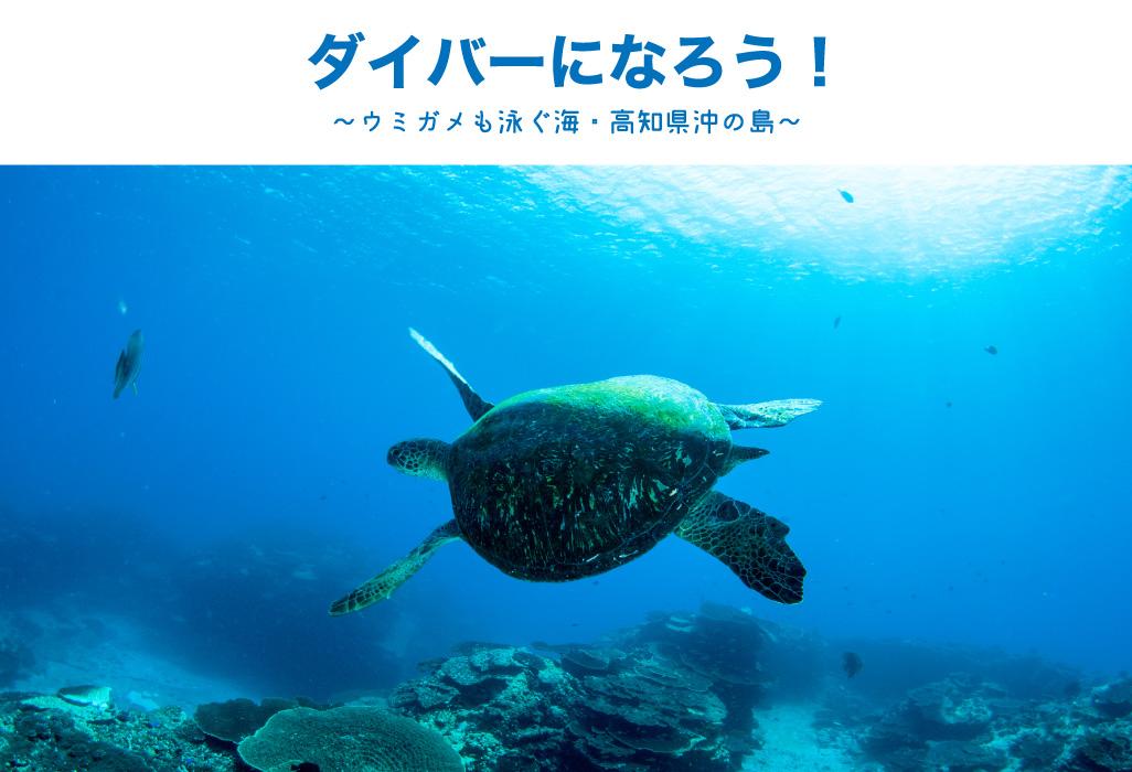 ダイバーになろう!〜ウミガメも泳ぐ海、高知県沖ノ島〜