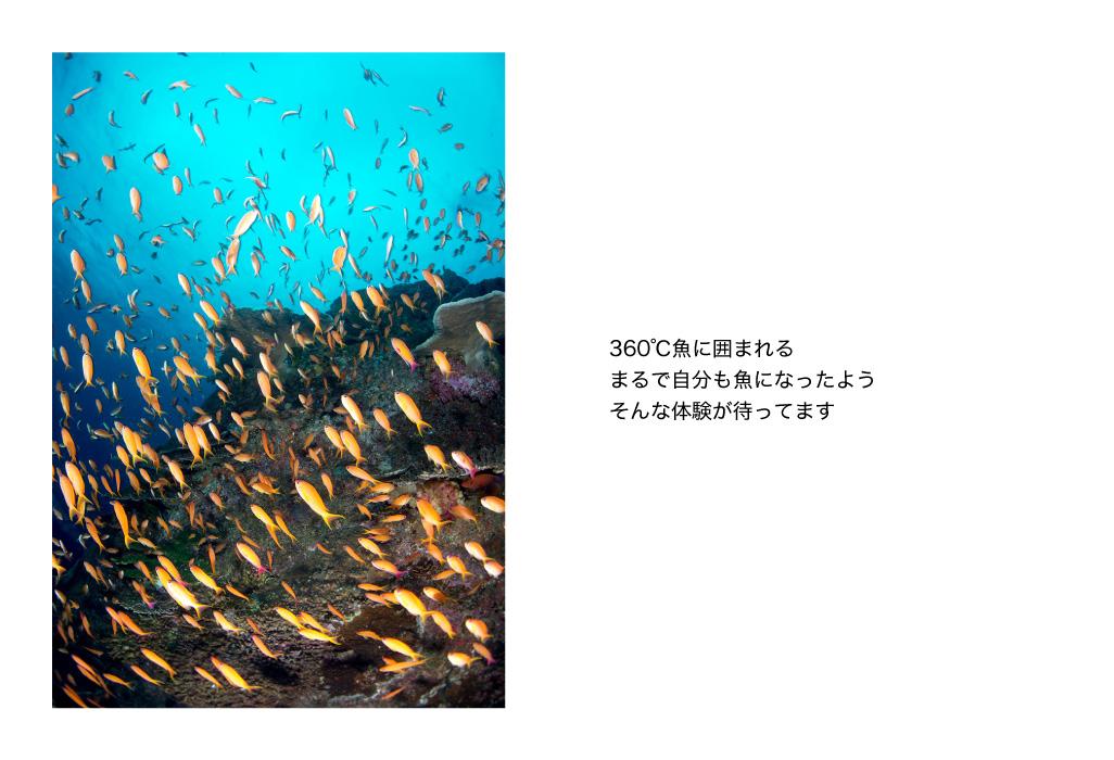 360℃魚に囲まれる。まるで自分も魚になっようそんな体験が待ってます