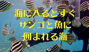 カラフルな魚とサンゴでいっぱい