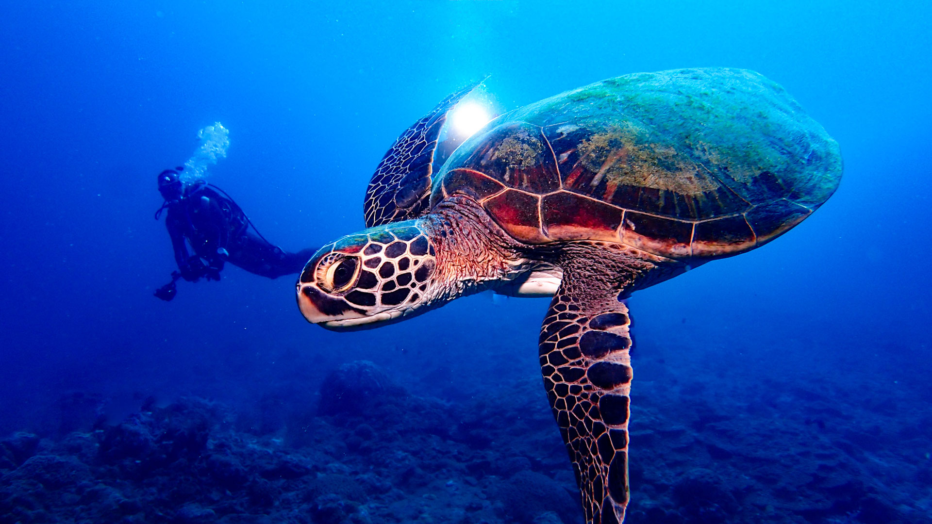 ダイビング水中写真:ウミガメ